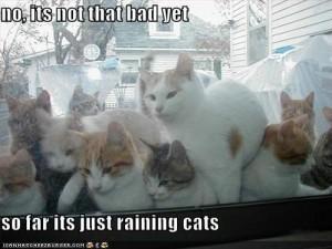 funny-pictures-it-is-raining-cats.jpg~original